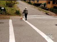 Vigilantes Paint Their Own Crosswalk In PA Neighborhood