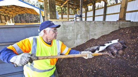 Pilot Project Tries Composting Road Kill