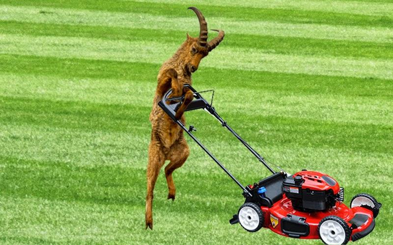 WSDOT To Use Goats to Control Vegetation Growth Near the North Spokane Corridor