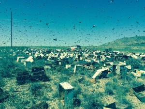 Traffic Accident Releases 20 Million Bees